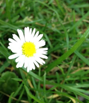 cropped-cropped-daisy.jpg